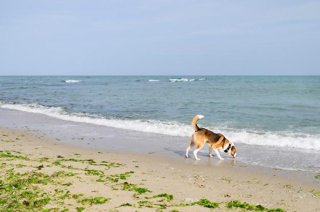 Śliczny piesek cieszy się czas outdoors