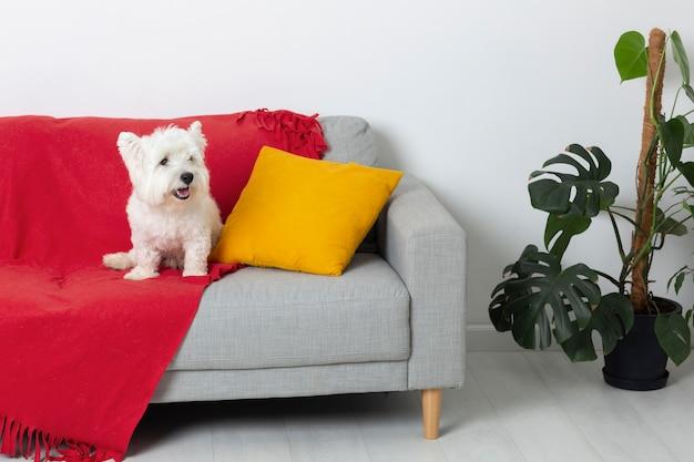 Śliczny piesek na kanapie