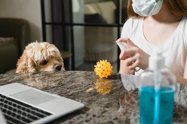 Śliczny piesek ogląda młodą kobietę w masce medycznej nakłada środek dezynfekujący na gumową piłkę w pobliżu biurka z laptopem, życie rodzinne w okresie izolacji
