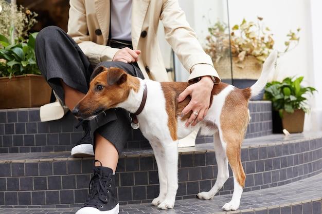Śliczny piesek rasy jack russell terrier stoi obok swojego właściciela, uważnie odwraca wzrok