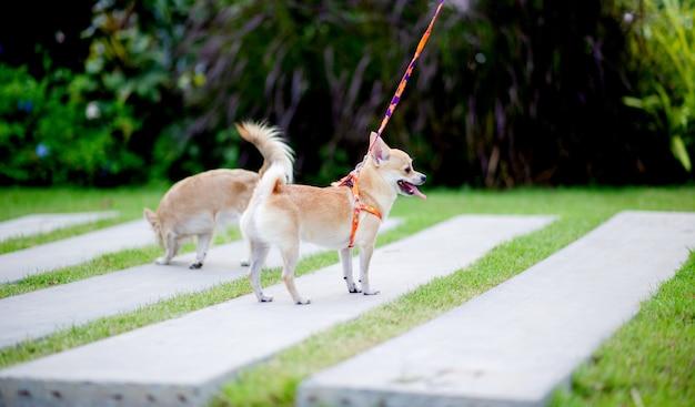 Śliczny Piesek Spacerujący Po Trawie Przed Domem. Premium Zdjęcia