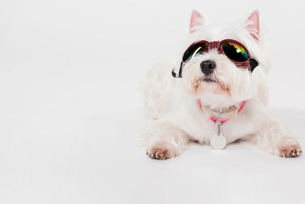 Śliczny piesek w okularach