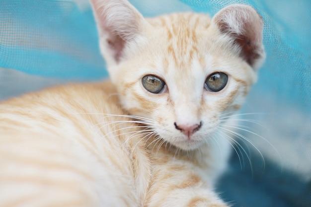 Śliczny pomarańczowy kotek w paski cieszy się i relaksuje na betonowej podłodze z naturalnym światłem słonecznym