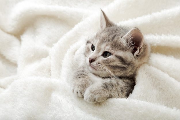 Śliczny pręgowany kotek leży na białym miękkim kocu. odpoczynek dla kota drzemiący na łóżku. wygodne spanie zwierzaka w przytulnym domu. widok z góry z miejsca na kopię.