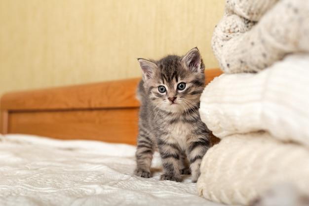 Śliczny pręgowany kotek stoi w pobliżu bunch dzianinowych ciepłych swetrów złożonych w stos. nowo narodzony kotek, kotek