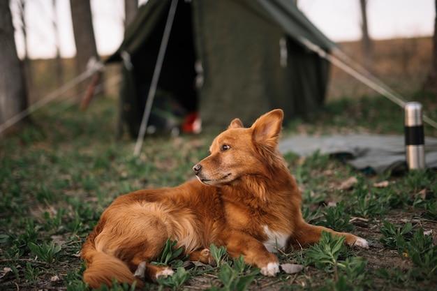 Śliczny psi obsiadanie na trawie