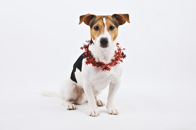 Śliczny psi szczeniak z czerwonym santa kapeluszem