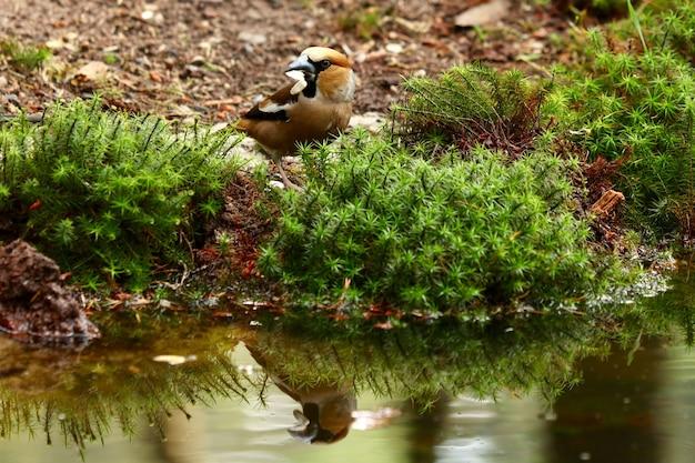 Śliczny ptak rudzik w pobliżu jeziora