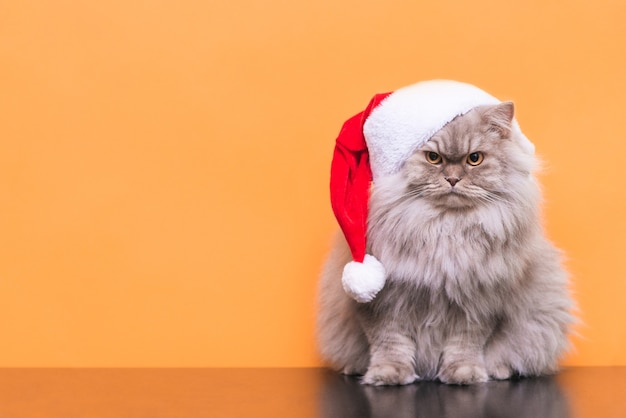 Ð¡ śliczny puszysty kot w świątecznej czapce
