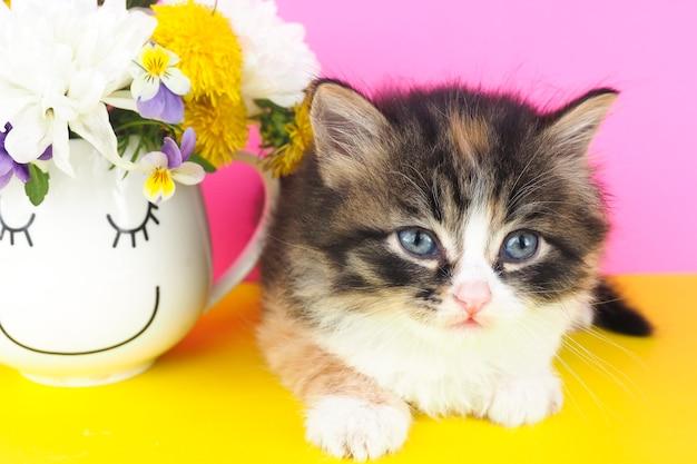 Śliczny puszysty kotek obok kubka z kolorowymi kwiatami na żółtym stole i różowym tle