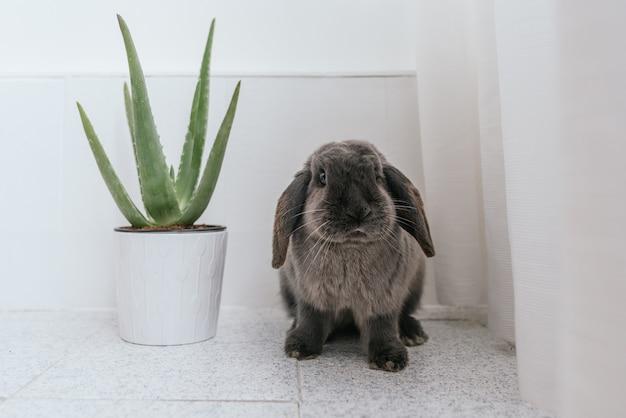 Śliczny puszysty króliczek cętkowany z szaro-białym futrem siedzący obok doniczki z zieloną rośliną doniczkową w domu