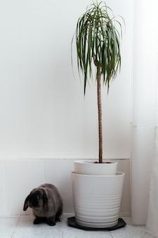 Śliczny puszysty królik siedzi na podłodze w pobliżu doniczkowej rośliny doniczkowej w nowoczesnym mieszkaniu