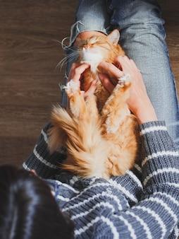 Śliczny rudy kot drzemiący na kolanach kobiety