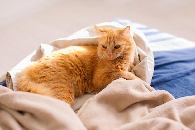 Śliczny rudy kot leżący w łóżku. puszysty zwierzak wygodnie ułożył się do snu. przytulne tło do domu z zabawnym zwierzakiem.