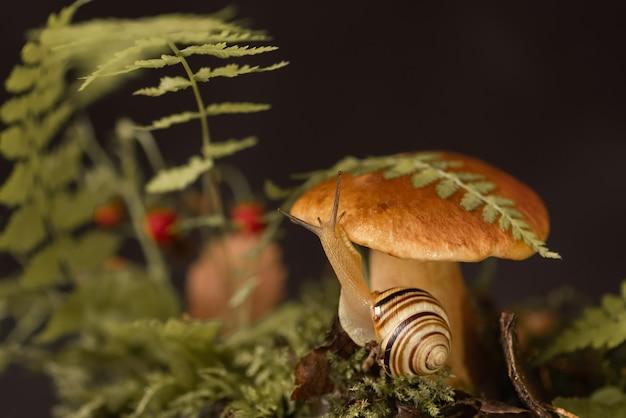 Śliczny ślimak z muszelką w paski czołga się wokół dużego borowika rosnącego przez mech i opadłe liście w lesie