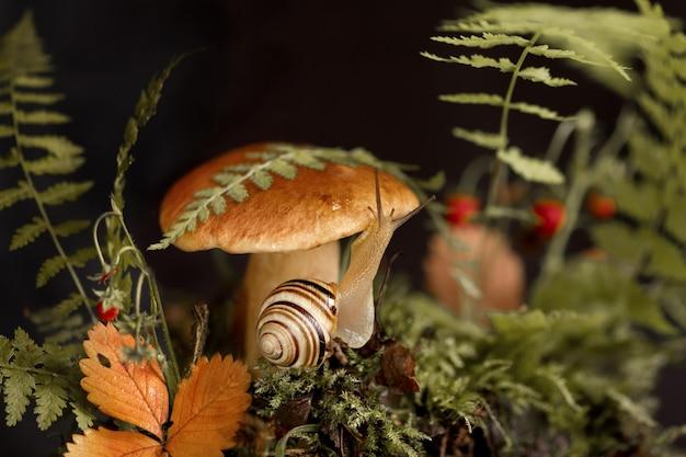 Śliczny ślimak z paskowaną skorupą czołga się wokół dużego borowika, porastającego mech i opadłe liście w lesie