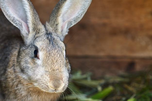 Śliczny szary i brown królik w klatce, zamyka up