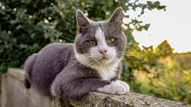 Śliczny szary kot na murku