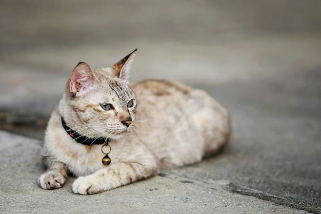 Śliczny szary kot siedzi na zewnątrz