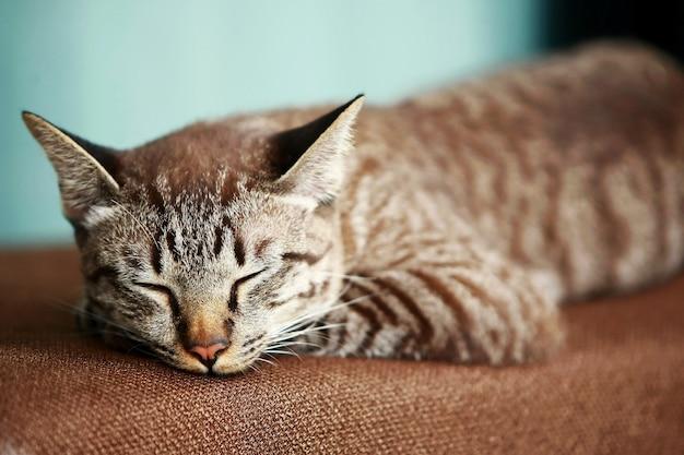 Śliczny szary kot śpi na zewnątrz