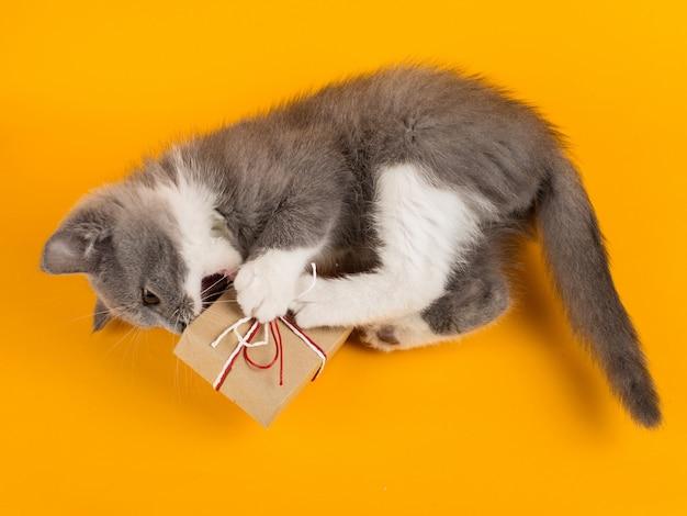 Śliczny szary kotek bawi się zabawnie i zabawnie z świątecznym pudełkiem na żółtym.