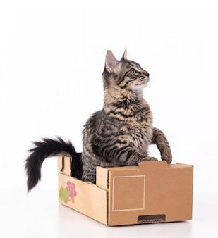 Śliczny szary pręgowany kotek w kartonowym pudełku na białym tle