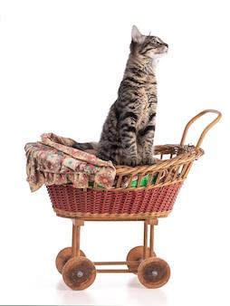Śliczny szary pręgowany kotek w wózku dla lalek na białym tle