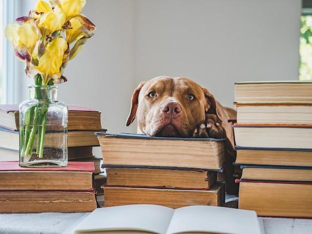 Śliczny szczeniak i zabytkowe książki.
