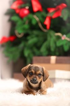 Śliczny szczeniak na dywanie na świątecznym tle