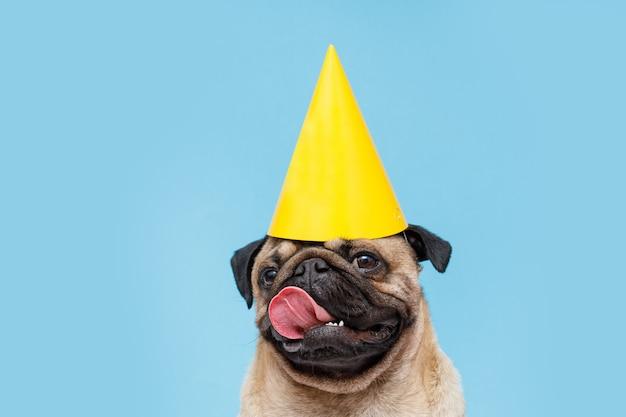 Śliczny szczeniak rasy mops z imprezowym kapeluszem na głowie uśmiechnięty pies