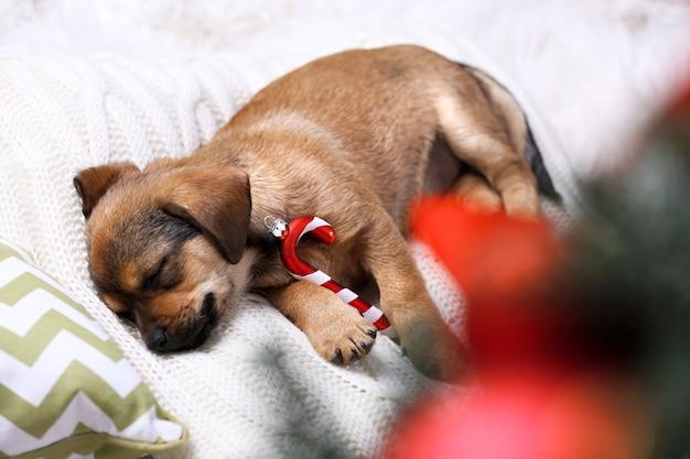 Śliczny szczeniak śpi na poduszce ze świątecznym wystrojem