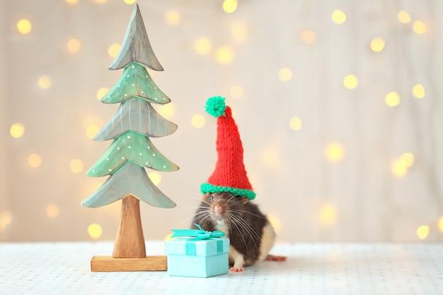 Śliczny szczur w kapeluszu w pobliżu ozdobnej choinki i mały prezent na stole przed nieostrymi światłami