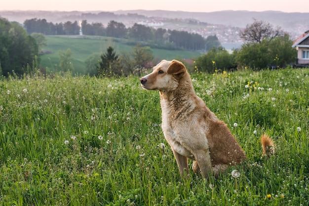 Śliczny uroczy brązowy pies