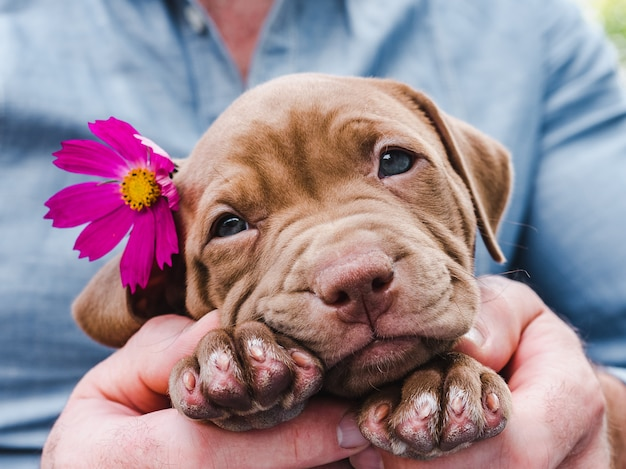 Śliczny, uroczy szczeniak i jasny kwiat