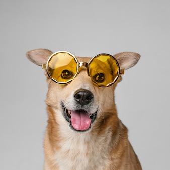 Śliczny uśmiechnięty pies nosi okulary przeciwsłoneczne