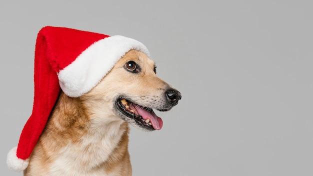 Śliczny uśmiechnięty pies w czapce mikołaja