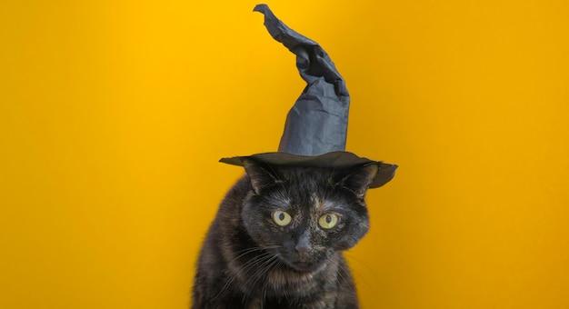 Śliczny wielobarwny kot w kapeluszu czarownicy na pomarańczowym tle. święto halloween.