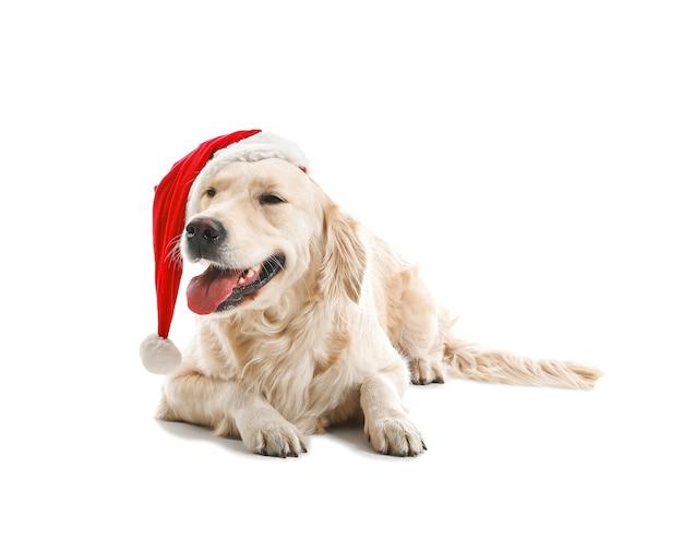 Śliczny zabawny pies w santa hat na białym