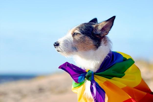 Śliczny zabawny pies z kolorową tęczową flagą lgbtq mniejszości seks duma wakacje koncepcja życia na świeżym powietrzu