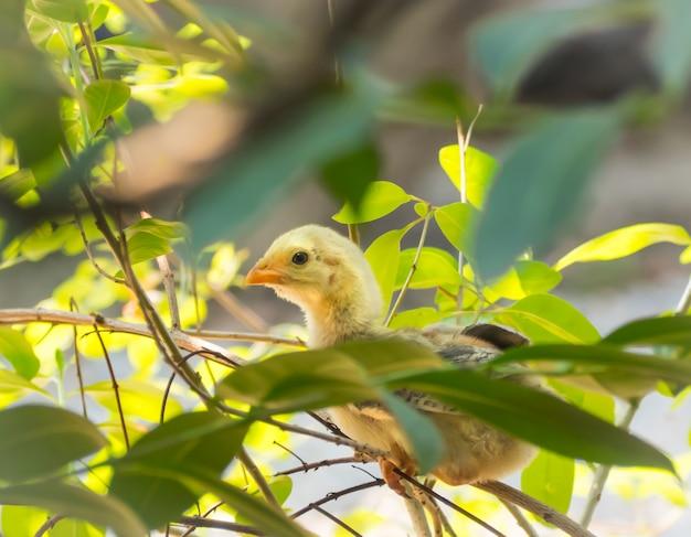 Śliczny żółty kurczątko stoi na gałąź.