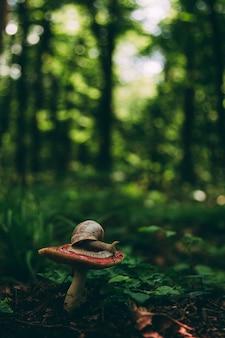 Ślimak czołga się po grzybie, latającym naturalnym tle. tapeta, przyroda, nieostrość, tonowanie.
