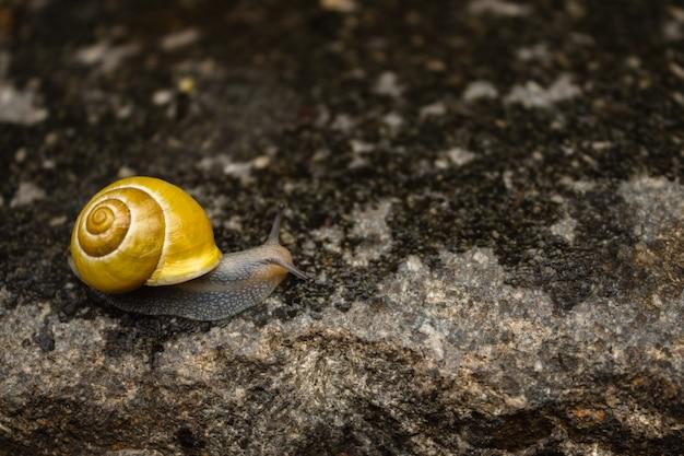 Ślimak czołgający się po mokrym kamieniu