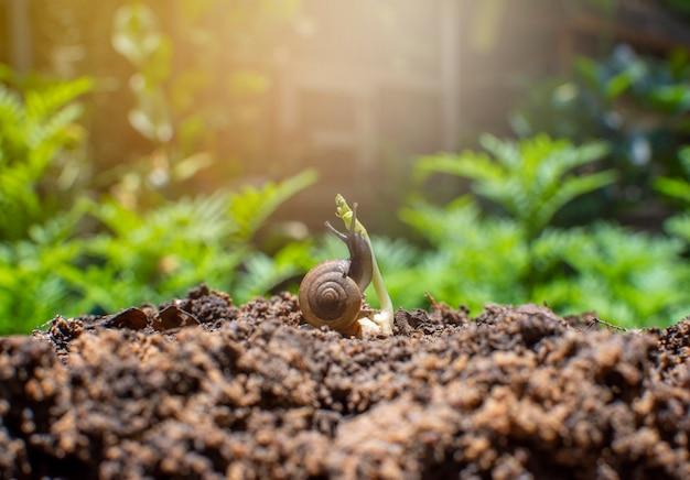Ślimak i sadzonka na kupie ziemi z tropikalnym ogrodem