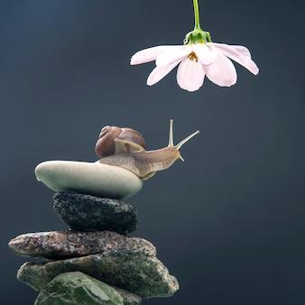 Ślimak na kamiennej piramidzie rozciąga się, by dotrzeć do białego kwiatu.