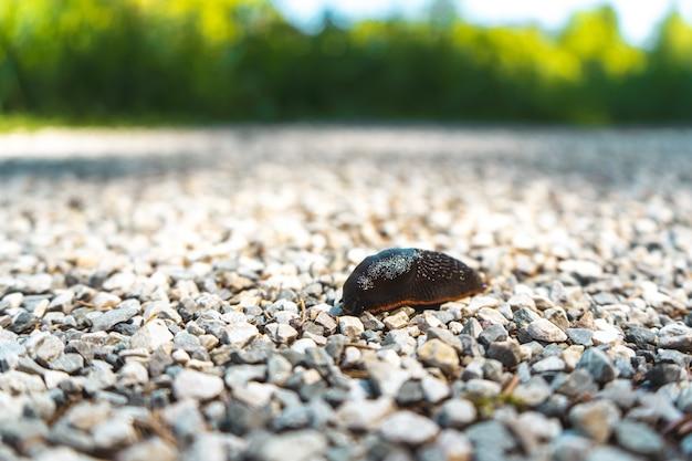 Ślimak na skałach otoczonych drzewami w bawarii, w niemczech