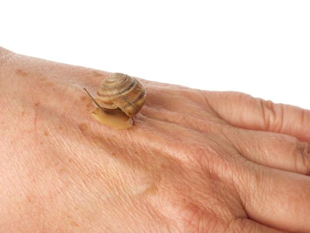 Ślimak pełza po kobiecej dłoni. produkt kosmetyczny wytworzony ze śluzu ślimaka mucyny. odmłodzenie. odosobniony.