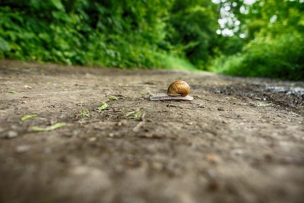 Ślimak pełzający po lesie