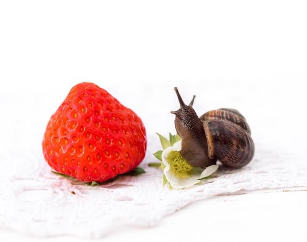 Ślimak siedzi na jagody truskawki, koncepcja lato