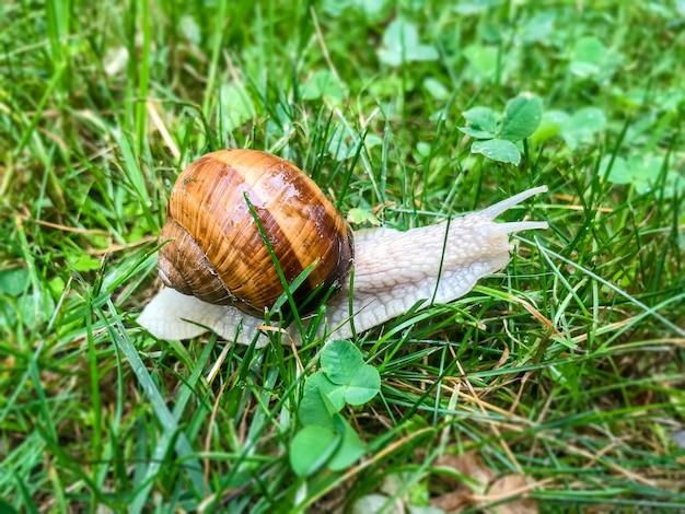 Ślimak w trawie