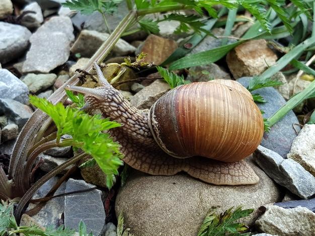 Ślimak w zielonej trawie